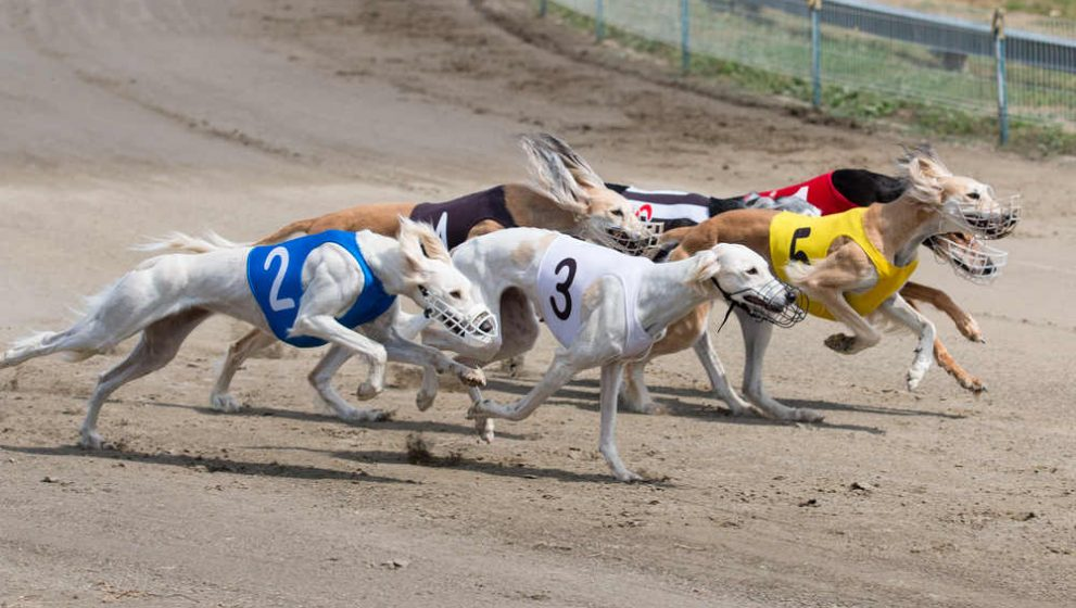 A Simple Guide To Success In Greyhound Racing